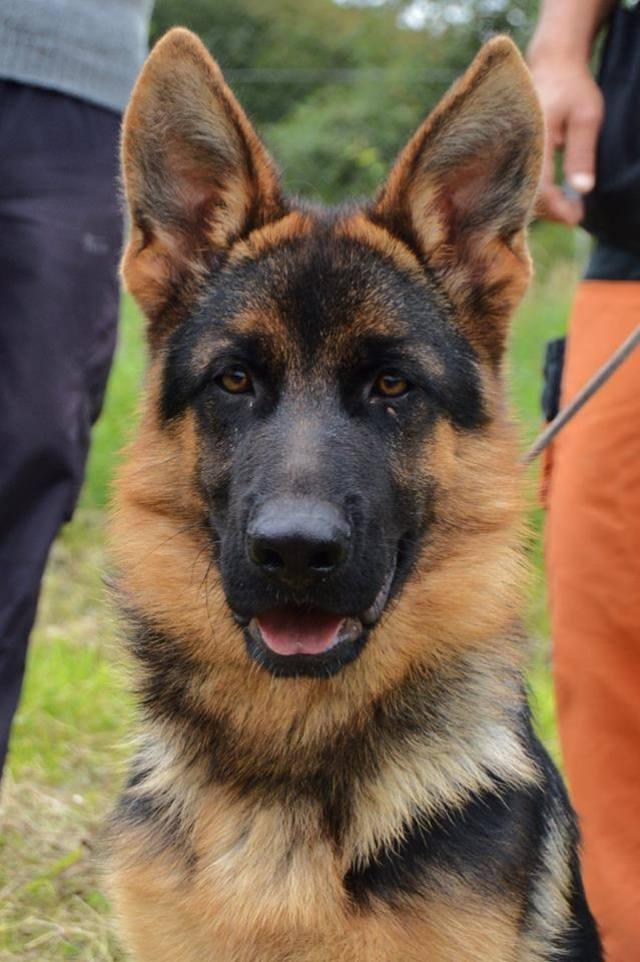 Torbi - puppy 1