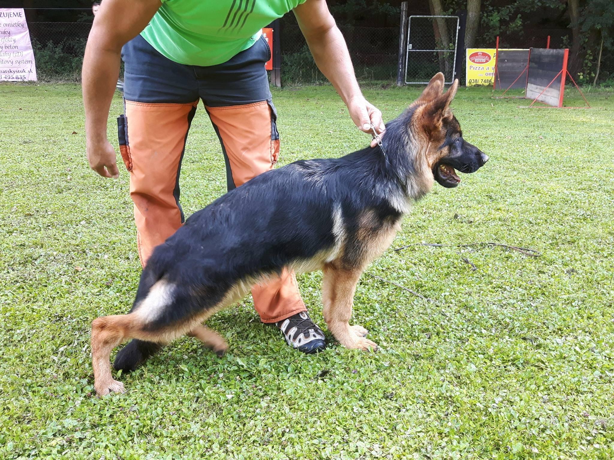 Torbi - puppy